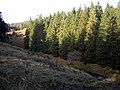 Large Conifers Beside Tweeden Burn - geograph.org.uk - 611610.jpg