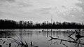 Laurentian Wetlands - Kitchener, Ontario 02.jpg