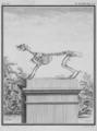 Le Lievre, squelette - Hare, skeleton - Lepus europaeus - Gallica - ark 12148-btv1b2300253d-f50.png