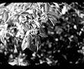 LeafVeins.jpg