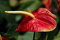 Leaf of Flower? (14446123581).jpg
