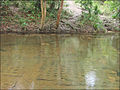 Les linga dans le lit de la rivière sacrée (Phnom Kulen) (6871639583).jpg