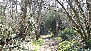 Lesnes Abbey Woods - Lesnes Abbey Woods