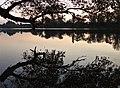 Lever de soleil sur le Rhône.jpg