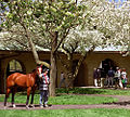 "Lexington Kentucky - Keeneland Race Track ""Paddock In Spring"" (4903109204) (2).jpg"