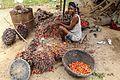 Liberia oil palm.jpg