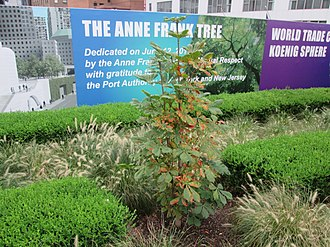 Liberty Park - The sapling from the Anne Frank tree
