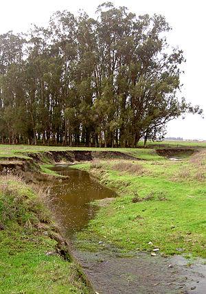 Lichau Creek - Lichau Creek and a stand of eucalyptus