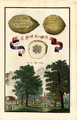 Limoni incanellati Volkamer 1708 136a.png