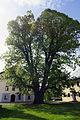 Linde in Zellhof am Grabensee 3.JPG