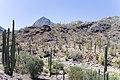 Los Cabos, Baja California Sur (21104123441).jpg