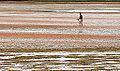 Low tide, Northumberland Strait (7698991032) (2).jpg
