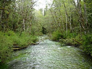 Lyre River - The Lyre River as it flows out of Lake Crescent.