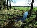 MOs810 WG 2018 8 Zaleczansko Slaski (nature reserve Cisy w Lebkach) (5).jpg