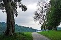 MacRitchie Nature Trail, Singapore; December 2014 (13).jpg