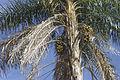 Macaúba (3) - 23 03 15S - 49 01 33W REFON.jpg