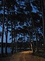 Mali Lošinj - panoramio (2).jpg