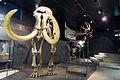 Mammuthus Megaloceros UZH.jpg