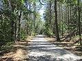 Mass Central Rail Trail eastbound, Coldbrook Springs MA.jpg