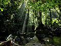 Mata-Atlântica-Parque Estadual Alto Ribeira- Iporanga - Brasil.JPG