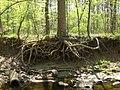 Matthew Henson Trail-5.jpg