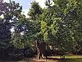 Minchenden Oak Garden, Southgate, London N14 20170804 104842 (32853808197).jpg