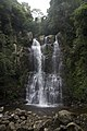 Minnamurra Rainforest - panoramio (37).jpg