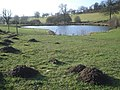 Mole activity at the upper ponds - geograph.org.uk - 650726.jpg