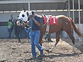 Montana Expo Park Horse Racing 01.JPG