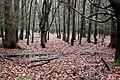 More woodland - geograph.org.uk - 1607059.jpg