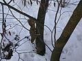 Morton Arboretum Winter 2005 14.JPG