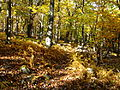 Mountain-trail-fall - West Virginia - ForestWander.jpg