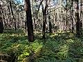 Mulloon fire trail in Tallaganda National Park, Palerang, New South Wales (2).jpg