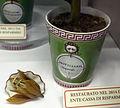 Museo di botanica, modelli in cera, fritillaria imperialis, fiore e vaso ginori.JPG