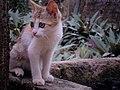 "My pet the ""CAT"".jpg"