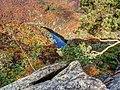 Národní park Podyjí Dyje Sealsfielduv Kamen Nationalpark Thayatal Sealsfield Stein 2013 10.jpg
