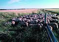 NRCSSD85016 - South Dakota (6215)(NRCS Photo Gallery).jpg