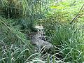 Naixement riu Bullent sequia Vedat.JPG