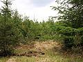 Nationaal Park Drents-Friese Wold 04.JPG