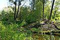 Nationalpark Donauauen, Stopfenreuther (Hainburger) Au4.jpg