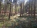 Natur Pfälzerwald bei Kaiserslautern 2.jpg
