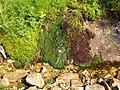 Natura - panoramio (2).jpg