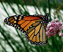 Nature Butterfly 19.jpg