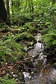 Nature reserve Libouchecké rybníčky in summer 2014 (15).JPG