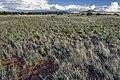 Near Black Mesa - Flickr - aspidoscelis.jpg