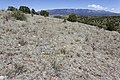Near Ft. Stanton - Flickr - aspidoscelis (4).jpg
