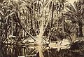 Nefta oasis - Tunisia - around 1930.jpg