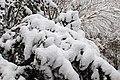 Neige à Saint-Rémy-lès-Chevreuse le 7 février 2018 - 01.jpg