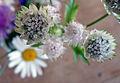 Nendaz Flower 02 (6152978252).jpg