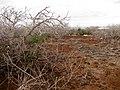 Nesting Ground, North Seymour Island (4884588349).jpg